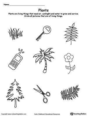 early childhood plants and animals worksheets. Black Bedroom Furniture Sets. Home Design Ideas